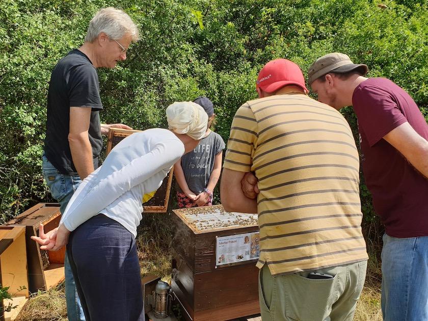 Gäste bewundern Bienenvolk
