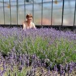 Im Lavendelfeld, Mussärol