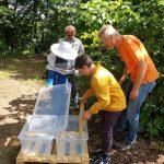 Kind befüllt Box mit Honigwabe