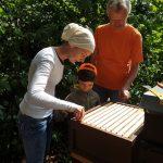 Kind zieht Honigwabe