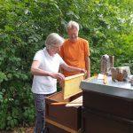 Bienenpatin Lis zieht Honigwabe