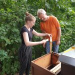 Eva fegt Bienen von Honigwabe