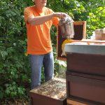 Reinhold erklärt Bienenflucht