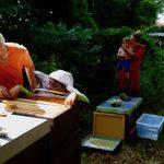 Kind zieht Honigwabe.