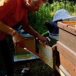 Kind hält Wabe und Reinhold kehrt Bienen ab.