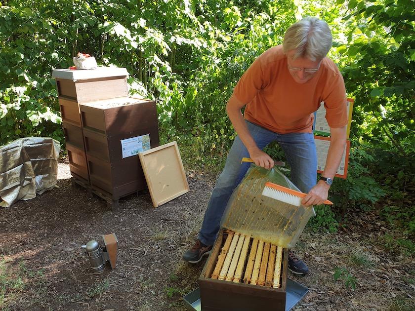 Reinhold öffnet Bienenvolk