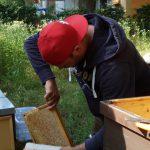 Gast kehrt Bienen ab
