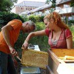 Gast hält Wabe und Reinhold kehrt Bienen ab.
