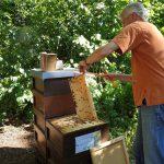 Reinhold zieht Honigwabe