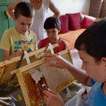 Entdeckeln der Honigwabe