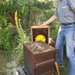 Eine Bienenflucht erleichtert das Ernten