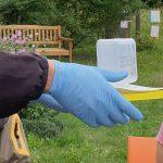 Theorie der Varroabehandlung, hier zur Ameisensäurebehandlung