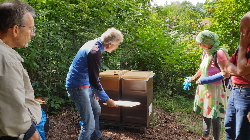 Windelkontrolle zur Ameisensäurebehandlung