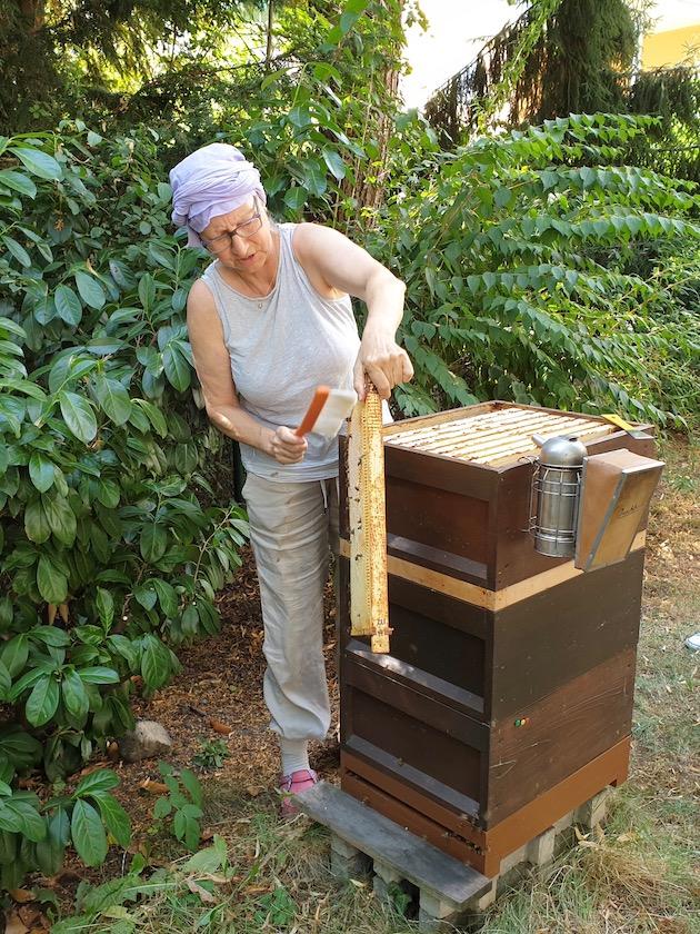 Gäste kehren Biene ab von Honigwaben.