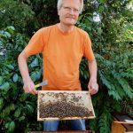 Reinhold zeigt bienenbesetzte Honigwabe.