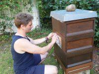 Bienenpate Marco Rust beim Anbringen des Patenschildes