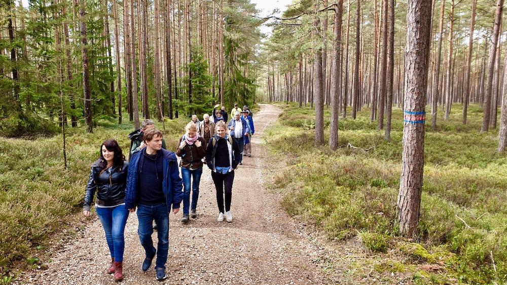 Fußweg durch den Wald