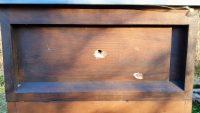 Vogelschaden an der Bienenbeute