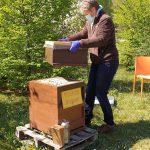 Abnehmen des Honigraumes