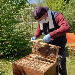 Abkehren von Bienen