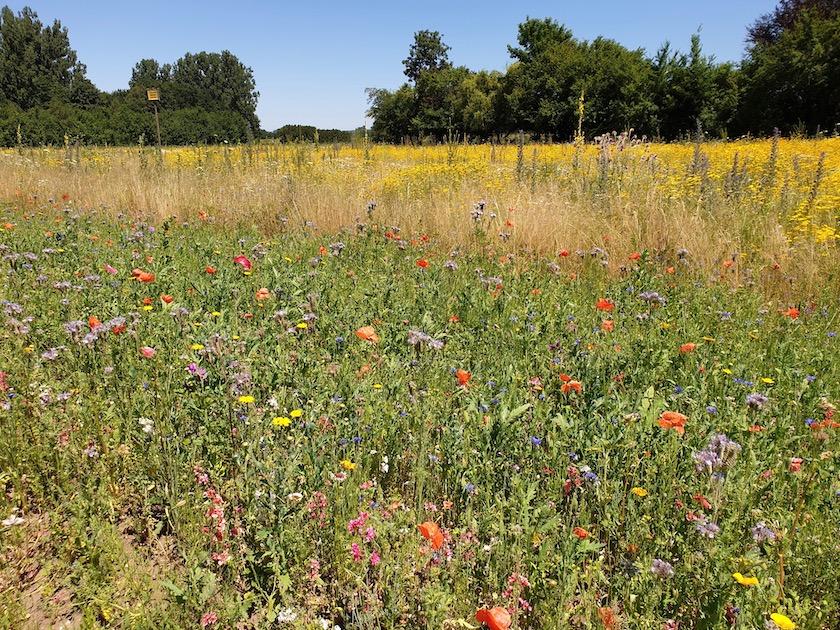 Blühwiese am Hof von Martin Bloeß in der Galgenfuhr