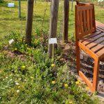Sitzbank im Bamberger Bienengarten