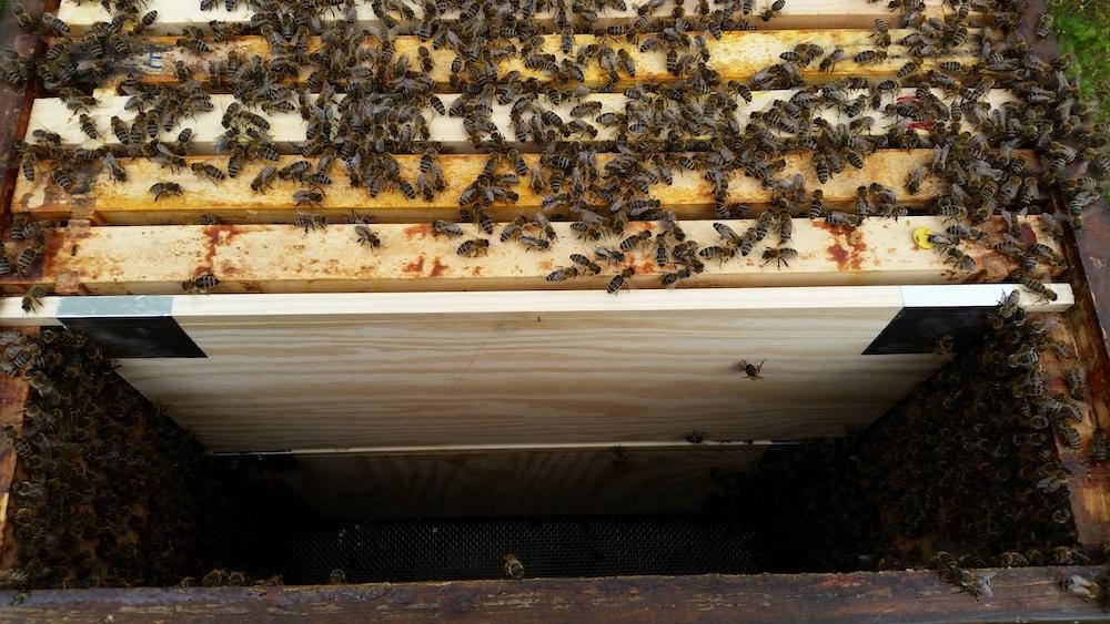 Praxisbeispiel Schiede in einer Bienenbeute