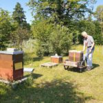 """Transport unseres Bienenvolks vom Bienenweg in den """"Welterbe-Garten"""""""