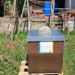 """Unser Bienenvolk im """"Welterbe-Garten"""""""