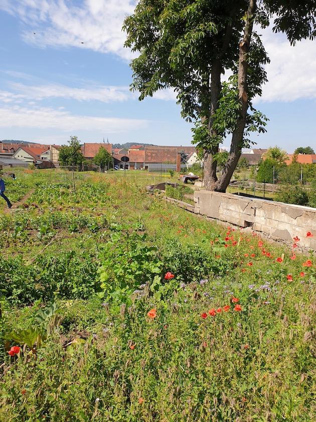 """Gedeckter Tisch für unser Bienenvolk im """"Welterbe-Garten"""""""