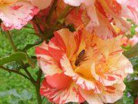 Biene an Rosa Paul Gauguin