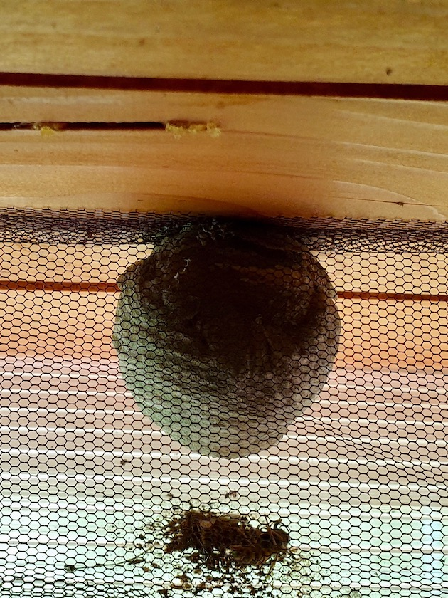 Wespennest an der Bienen-InfoWabe