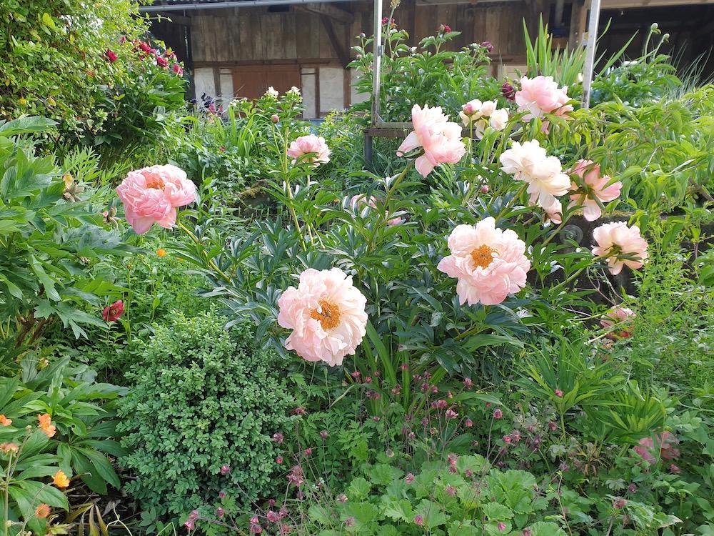Beet im Vorgarten des Blumengarten von Andrea Köttner, Obermarchtal