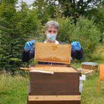 Honigernte am Bienenweg AK20