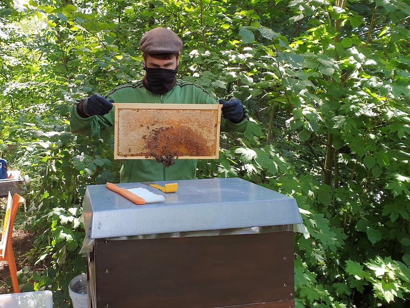Honigernte am Fünferlessteg AK20