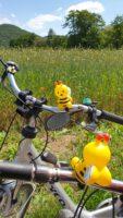 Unsere hupende bzw. quietschende Fahrrad-Bienen