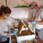 Honigverarbeitung vom Fünferlessteg