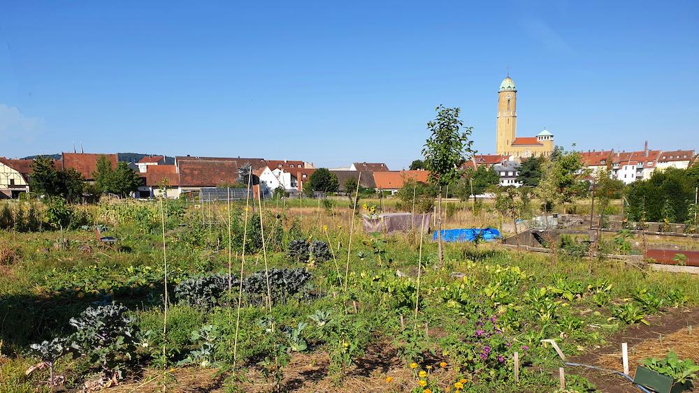 "Bamberger Lagenhonig, Lage ""Welterbe-Garten"""