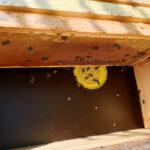 Honigernte Bamberger Lagenhonig der Lage Schiffbauplatz 2020
