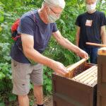 Am Lehrbienenstand Fünferlessteg, Modul 9 Wabenhygiene und Varroabehandlung