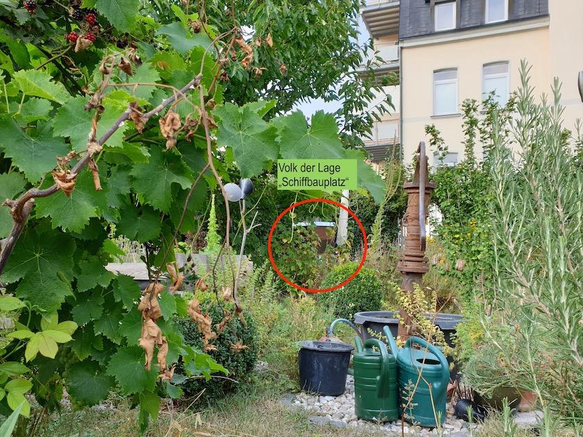 """Das Bienenvolk an der Lage """"Schiffbauplatz"""""""