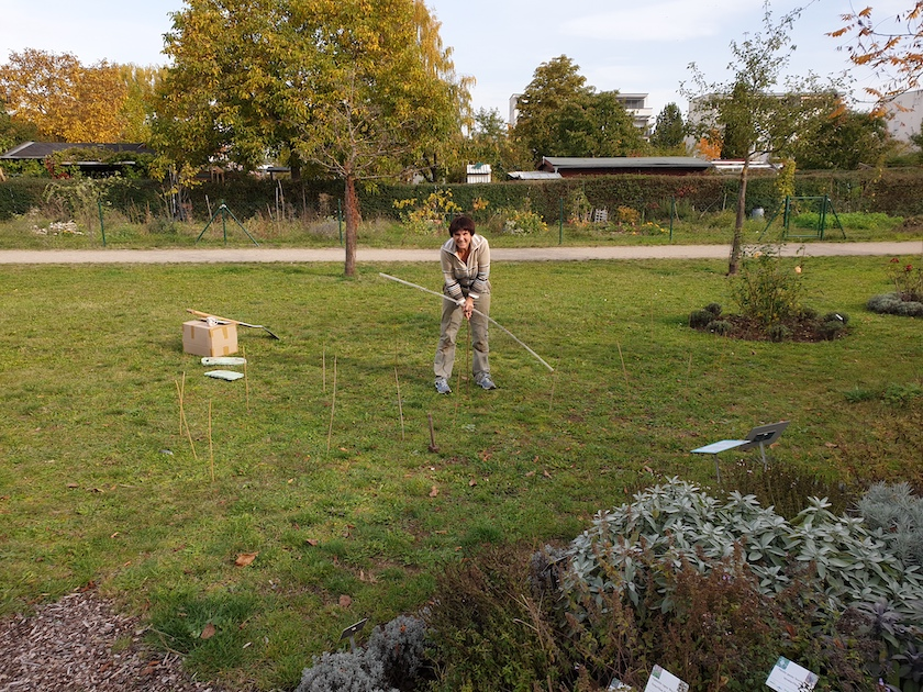Anlegen eines Schau-Pfingstrosenbeetes im Bamberger Bienengarten