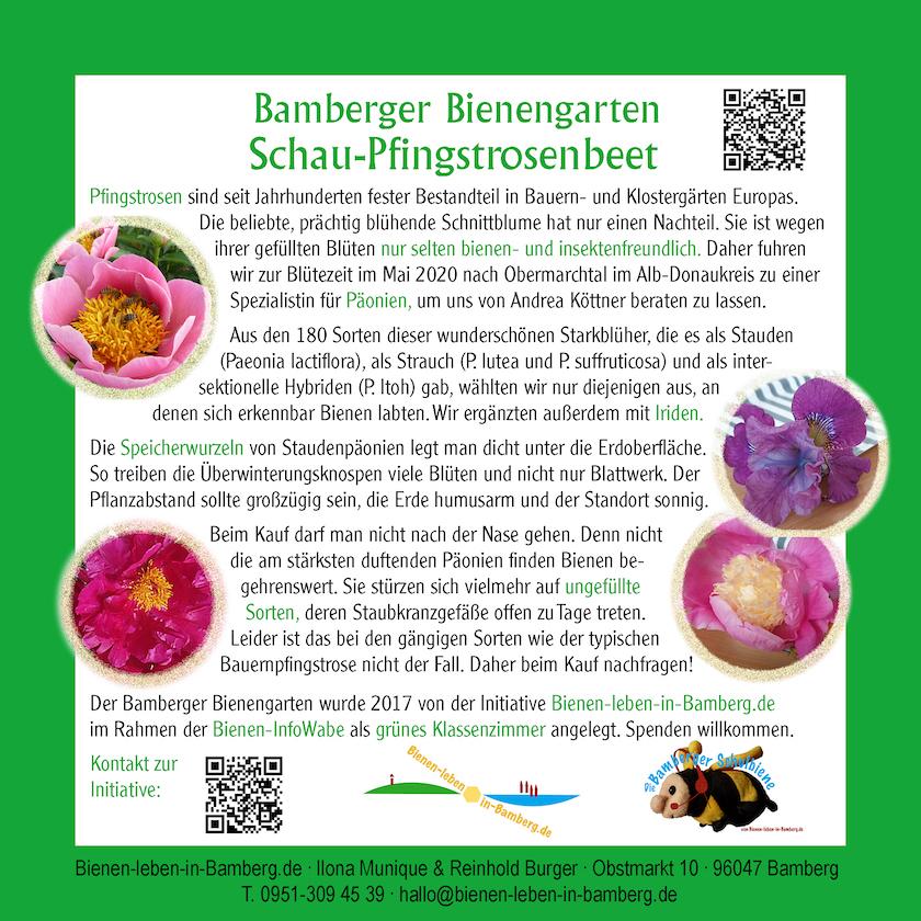 Infotafel Schau-Pfingstrosenbeet im Bamberger Bienengarten