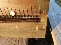 Kotspritzer auf Bienenbeute bei der Frühjahrsreinigung / Reinigungsflug