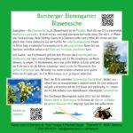 Infotafel zu den Blaseneschen im Bamberger Bienengarten, Bienenweg 1