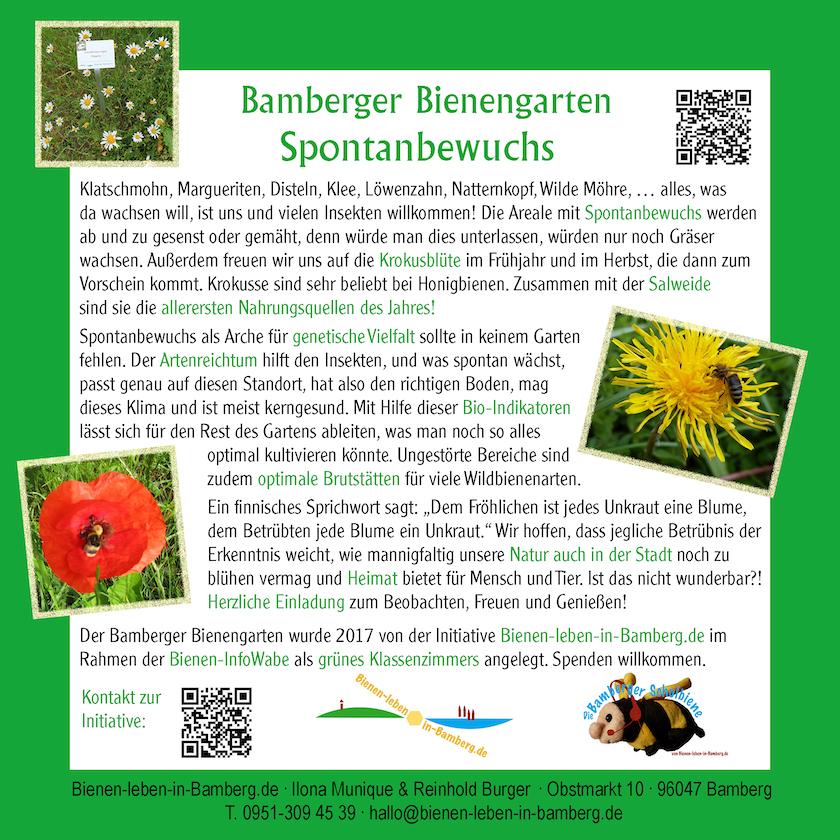 Infotafel Spontanbewuchs, Bamberger Bienengarten
