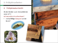 Folie-Frühjahrsarbeiten-AK21-M2-BLIB-Imkeranfaengerkurs