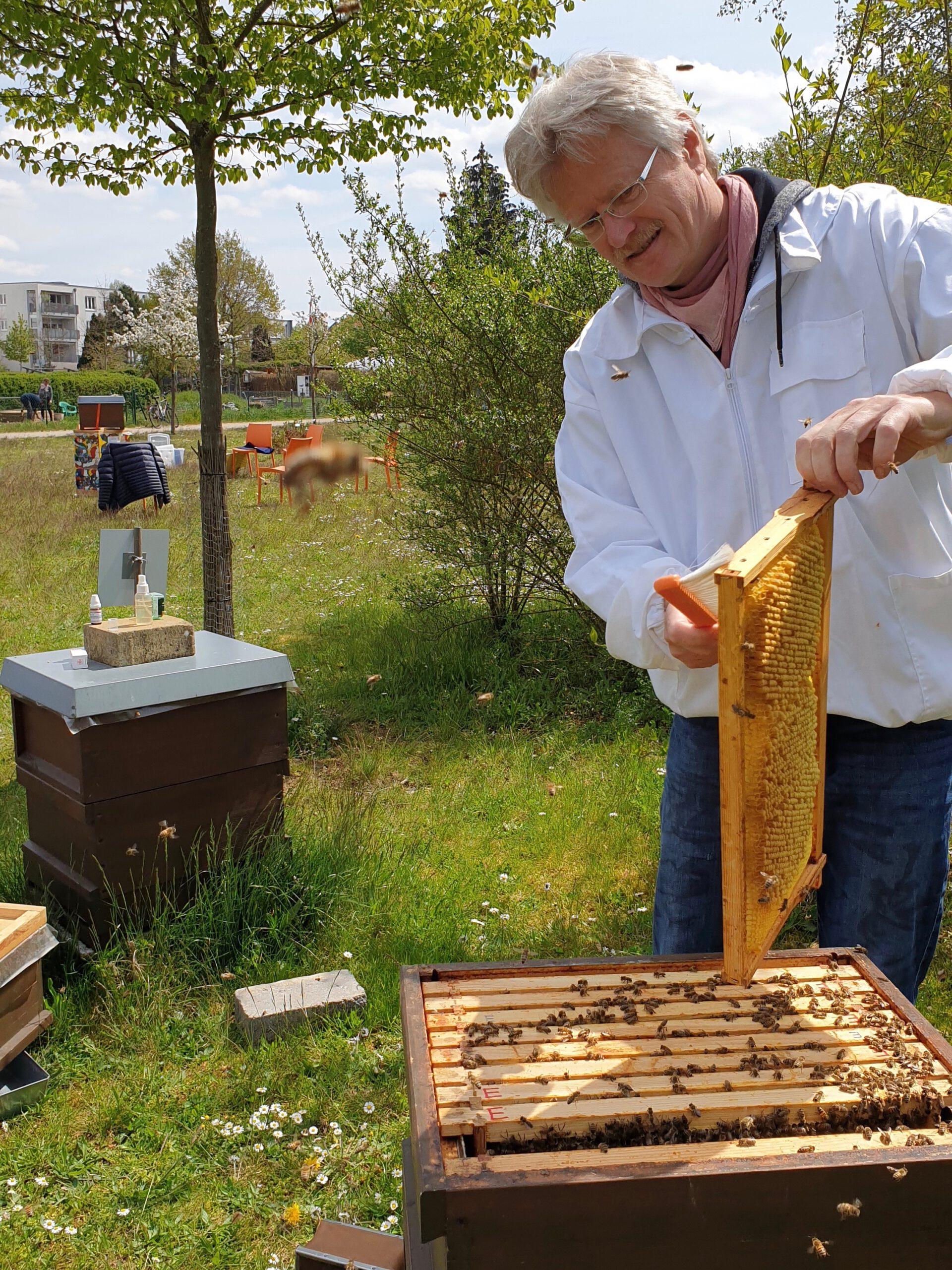 Abkehren der Bienen vom gezogenen Drohnenrahmen