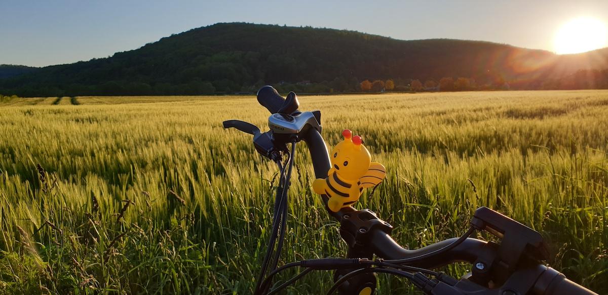 Sonnenuntergang mit Radbiene in der Fränkischen Schweiz